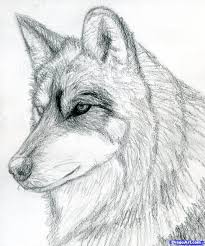 gray wolf face drawing. Modren Drawing Gray Wolf Face Drawing  Photo27 For Wolf Face Drawing K