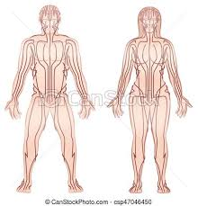 Acupuncture Meridian Chart Free Download Body Meridians Man Woman Couple