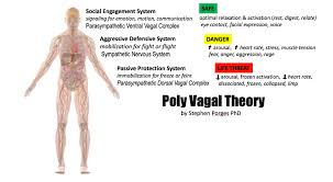 Polyvagal Theory Chart Porges Poly Vagal Theory Relaxing Our Face Chest Belly