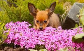 dog repellent plants can certain