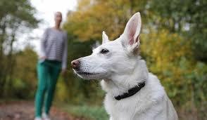 Лучшие ошейники от блох для <b>собак</b>: рейтинг топ-10 по версии КП