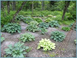 Small Picture How To Design A Garden With Hostas The Garden Inspirations