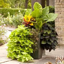large container with tropical plants