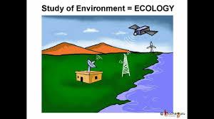 essay on environmental pollution in telugu edu essay