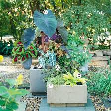 Small Picture Container Garden Recipes for Shade Gardens and Elephant ears