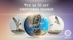 Роль экологии Какова роль экологии в современном мире ru Роль экологии Какова роль экологии в современном мире