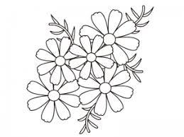 コスモス秋桜の群生のぬりえ線画イラスト素材 イラスト無料