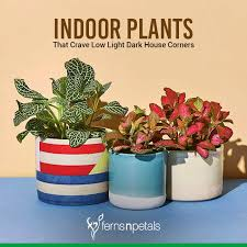 indoor plants that crave low light