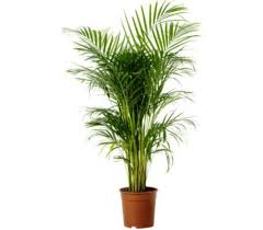 Image Shade Detail Grow Care Buy Above Plant u003eu003e Browse All Indoor Plants u003eu003e Learnncodeco Love Plants But No Sunlight These Plants Can Be Your Best Buddy