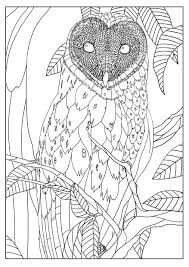 Barn Owl By Mizu Owls Adult Coloring Pages