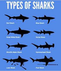 Universal Shark Id Chart