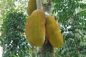 Fruits To Eat When You Are In Kerala  The Travel JoysKerala Fruit Trees