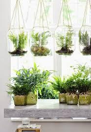 terrarium design how to make a hanging terrarium hanging terrarium globe hanging ferns small hanging