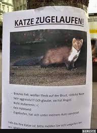 Katze Zugelaufen Lustige Bilder Sprüche Witze Echt Lustig