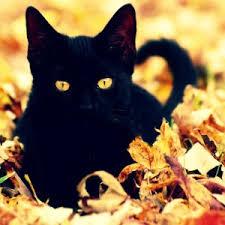 halloween black cat. Simple Halloween The History Of Halloween Black Cats On Halloween Cat