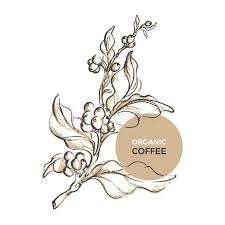 Branch Template Template Of Branch Of Coffee Tree Vector Illustration Stock