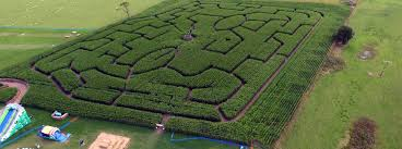 york maze. york maze