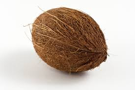 Image result for images of coconut