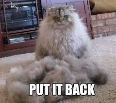 Fluffy Kitty Meme | Funny | Pinterest | Kitty, Fluffy Cat and Meme via Relatably.com