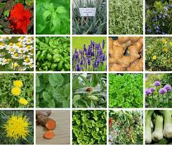 35 Easy To Grow Medicinal Plants To Make Your Own Herbal