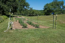 garden electric fence. Vegetable Garden With Caged Tomatoes, Mulched Straw, Deer Electric Fencing Fence, Protected Fence O