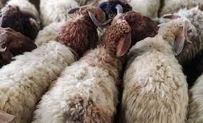 أضاحي العيد : آداب الأضحية وأحكام تقسيم وتوزيع لحمها - مدونة قطر الخيرية