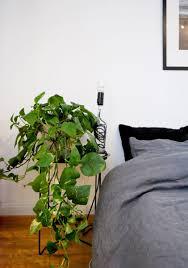 Zimmerpflanzen Blickfang Luftreiniger In Einem Mirohome