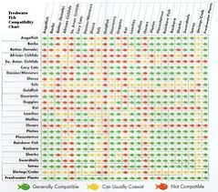 Freshwater Fish Compatibility Chart Mohamed Attallah Flickr