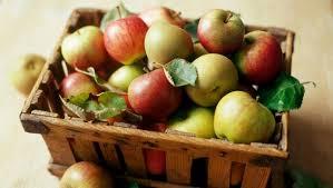 apple food. apple food
