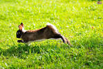 My favourite pet rabbit essay