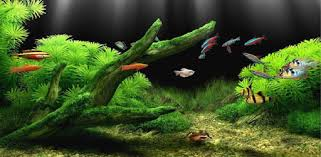 fish tank wallpapers. Delighful Tank With Fish Tank Wallpapers