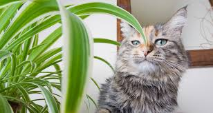 30 common houseplants from a z that are toxic to pets