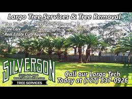 affordable tree cutting prices largo fl near me in tree cutting prices69