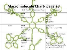Biological Macromolecules Chart Macromolecules Biology Carbons Unique Bonding Properties