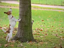 9 ways to get rid of squirrels