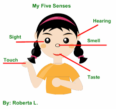 Senses Facts for Kids