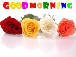 beautiful good morning roses photo for whatsapp profile full hd picture for friend stock image gallery and mobile