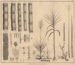 """Résultat de recherche d'images pour """"l'histoire du sucre imageries d'Epinal"""""""