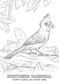 North Carolina State Bird Coloring Page Free Printable Coloring Pages