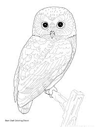 Barn Owl Coloring Pages Gamecornerinfo