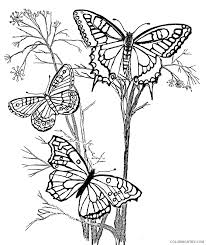 Who does not love the beauty of their colors and the flutter of their wings? Design Coloring Pages Butterflies Coloring4free Coloring4free Com