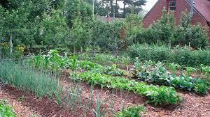starting a vegetable garden the basics