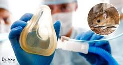 Image result for hantavirus treatment