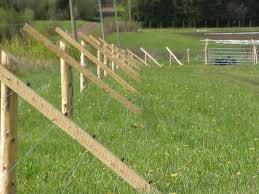 Deer Proof Electric Fence Design Keeping Deer Out Of The Garden Works Like A Charm Deer