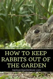 rabbits can wreak havoc in the garden keep rabbits out of your flower beds and
