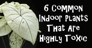 toxic house plants fi