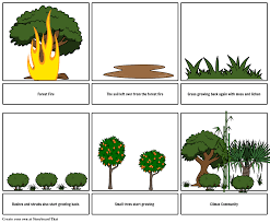 Primary Succession And Secondary Succession Venn Diagram Secondary Succession Diagram World Of Reference