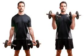 Gym Biceps Workout Chart Bicep And Tricep Workouts For The Home And Gym