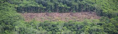 amazon rainforest deforestation.  Rainforest Amazon Deforestation To Rainforest Deforestation O