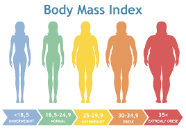Underweight Normal Overweight Obese Chart Body Mass Index Vector Illustration From Underweight To